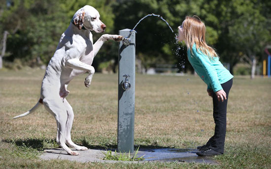 Dog Water Fountain Soup